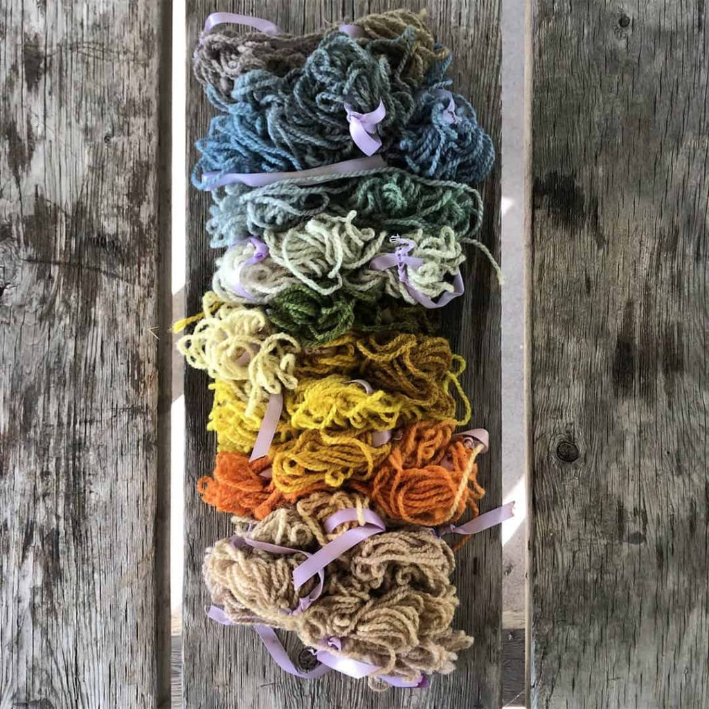 how to grow a dye garden